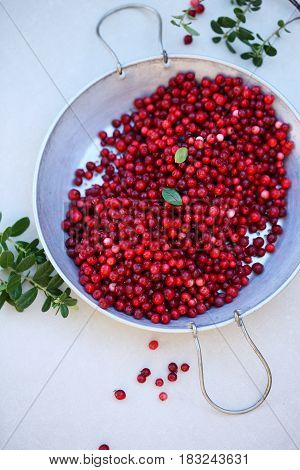 Fresh ecological lingonberry from in the Sieve. Top view