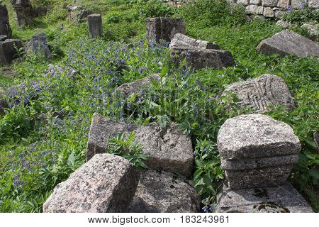 Photo of ancient ruins. Athens historic centre Kutaisi Georgia. Blue flower with ruins in background