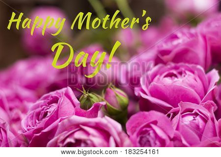 Postcard With Purple Roses And Sign Happy Mother's Day. Bouquet Of Magenta Roses