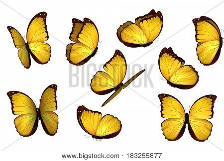 Set colorful isolated butterflies. View Insects Lepidoptera Morpho amathonte Vector illustration