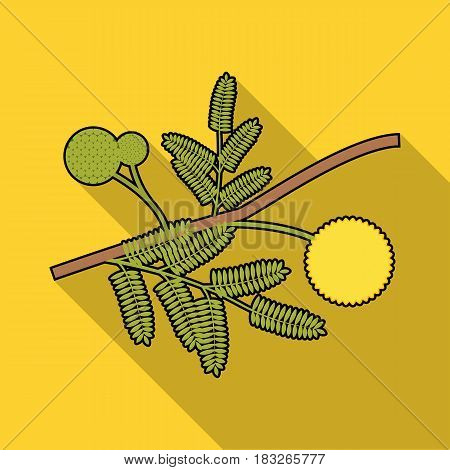 Yellow mimosa flower icon in flat design isolated on white background. Australia symbol stock vector illustration.