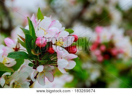Beautiful Spring Flower Spring Flowering Trees
