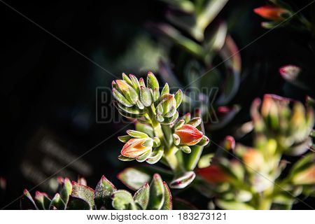 summer flowers. flowers in the summer, Flowers of the summer, Red bud summer flowers. summer flowers in the park, Flowers with dark background, The park with red and green summer flowers, summer concept.