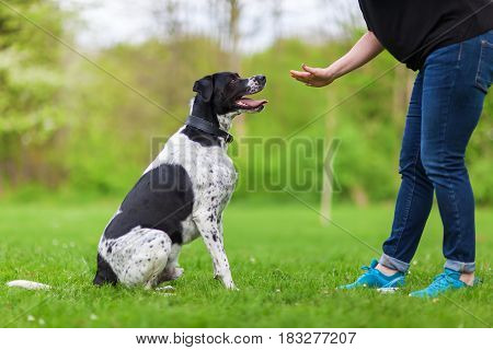 Woman Gives A Command To Her Dog