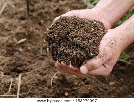 Plant organic compost fertilizer on farmer hand for planting