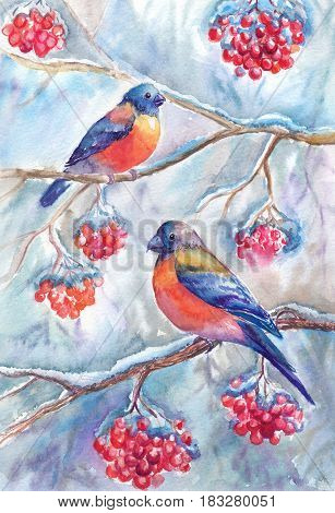 Watercolor winter picture with bullfinches sitting on branches of rowan. Painting suitable for poster craft cover postcard and other printed products.