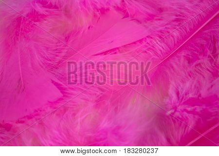 This is a photograph of Bright Pink craft feathers background