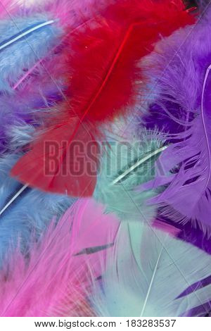 This is a photograph of colorful craft feathers background