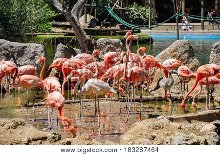 A flock of pink flamingosat sunny summer day.