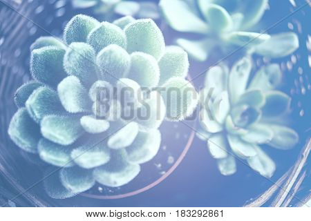 Green house plants potted, succulents in a basket. Home gardening, macro close-up. Scandinavian rustic style decor.