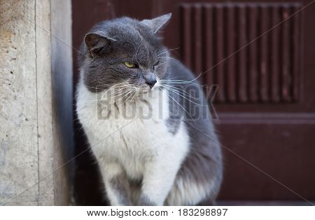 Picture of a cute cat on a sidewalk looking around