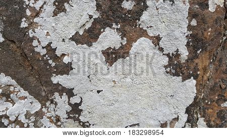 Rock surface covered with fungi, lichen texture