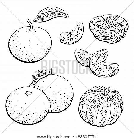 Mandarin fruit graphic black white isolated sketch illustration vector