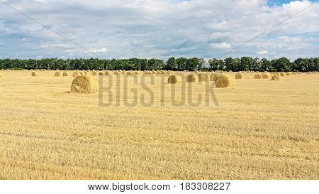 Landscape with the straw bales on mowed field