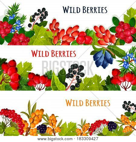 Wild berries and wildberry fruits vector banners. Cranberry or rowanberry and ashberry harvest, garden buckthorn and honeysuckle, wild barberry or juicy blackberry or blueberry, haw or briar