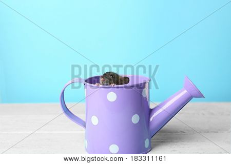 Cute funny rat in watering pot on wooden table