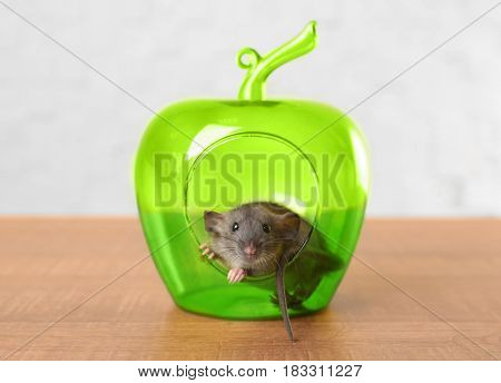 Cute funny rat and decorative apple on table at home