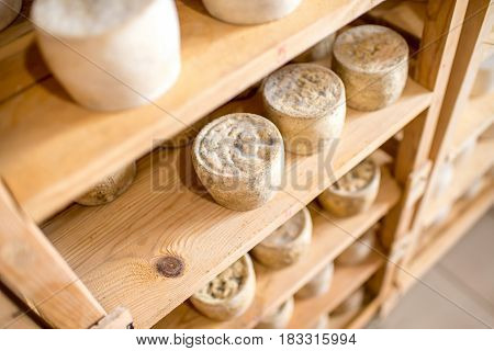 Goat cheeses aging on the wooden selves at the cellar