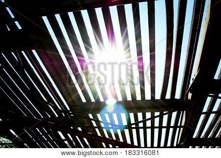 The bright rays of the sun make their way through the summer roof in the form of a lattice