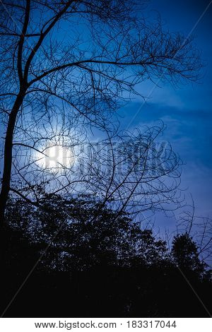 Silhouette of dry trees against night sky with moonlight over tranquil at forest. Beautiful nature background outdoors at nighttime.
