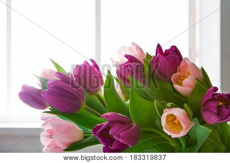 Beautiful flowers bouquet background. Violet and pink tulips in window backlight with copy space. Mockup for greeting card