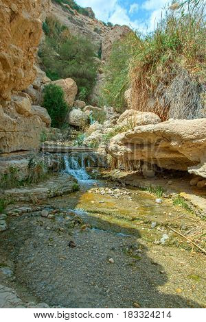 Hidden among the rocks at the Dead Sea, Ein Gedi Reserve, is like the Garden of Eden, in this desert area