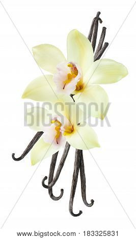 Vanilla bean flower vertical isolated on white background as package design element
