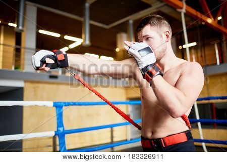 Portrait of shirtless fighter practicing straight punches with resistance band belt in boxing ring