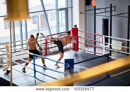 Wide shot of two men fighting in boxing ring: boxer laying high kick hit to head