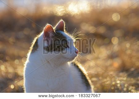 Cat in golden light on late afternoon. Focus on foreground.