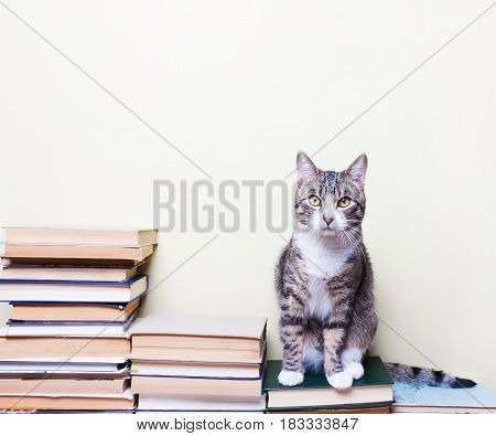 Cat sitting on the books concept studies education
