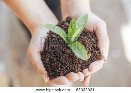 green plant out of the ground in female hands