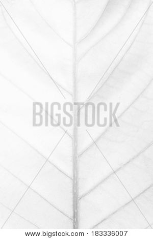 White Leaf Texture Background. Suitable for Presentation and Web Templates with Space for Text.