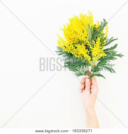Branch of mimosa flowers in woman hand on white background. Flat lay, Top view. Floral background