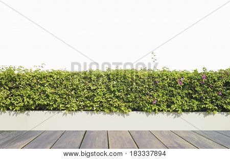 Old wooden decking and plant with wall garden decorative