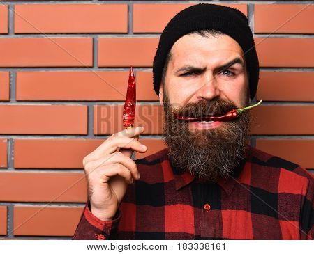 Bearded Man, Brutal Caucasian Squinting Hipster With Red Pepper