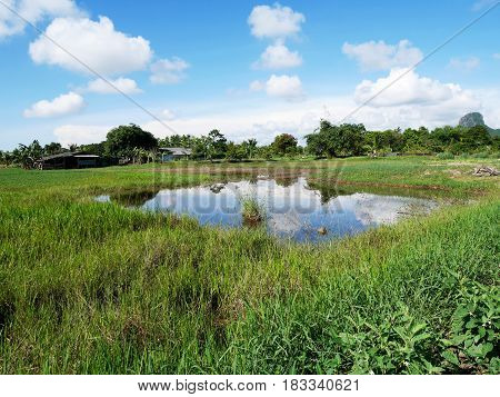 Landscape Of Grow Plant Crops And Aquaculture Natural Fish Ponds At Outdoor Garden
