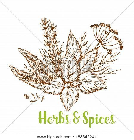 Fresh herbs and spices sketch. Basil, rosemary, thyme, dill, bay leaf, cumin, and sage isolated bunch of culinary herbs for greengrocery and spice shop label, food packaging design