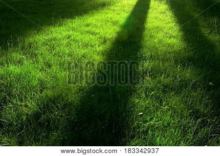 Idyllic glade at morning sun with long shadows. Natural abstract background seasonal forest and outdoors theme