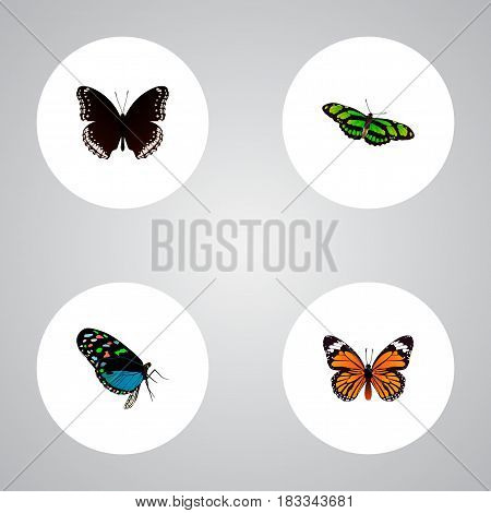 Realistic Monarch, Hairstreak, Green Peacock And Other Vector Elements. Set Of Moth Realistic Symbols Also Includes Monarch, Fly, Hypolimnas Objects.