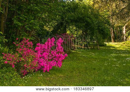 Enchanted garden with beautiful pink flowers, Italy