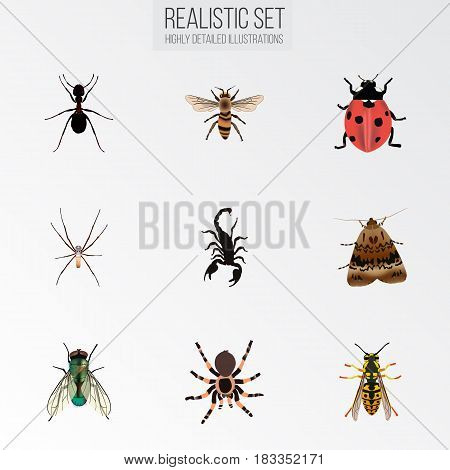 Realistic Tarantula, Housefly, Butterfly And Other Vector Elements. Set Of Hexapod Realistic Symbols Also Includes Housefly, Spider, Sting Objects.