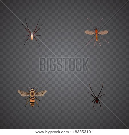Realistic Spinner, Spider, Wisp And Other Vector Elements. Set Of Bug Realistic Symbols Also Includes Spider, Spinner, Mosquito Objects.