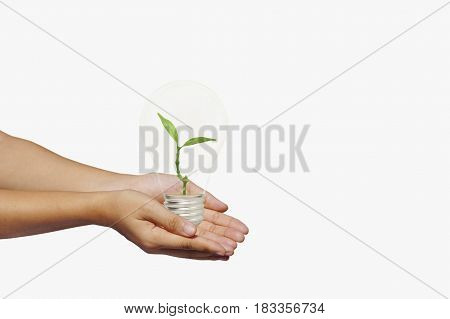 hand holding and giving bulb of green tree isolated on white background concept in save energy power and world by plant