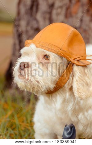 White Dog Using A Leather Hat With Nature Background