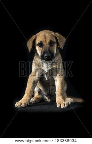 Little Cute Mestizo Puppy