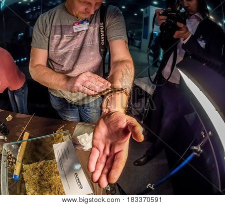 MOSCOW RUSSIA - APRIL 21 2017: Andrew Kozorog tutor of macro photography workshop at booth of Olympus company at PhotoForum 2017 demonstrate millipede in Moscow Russia on April 21 2017.