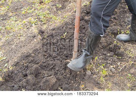 Gardener works in the garden, digging the soil for planting in the spring, gardening