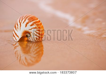 seashell nautilus on sea beach under sunrise sun light, Canary island, Spain