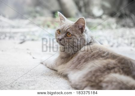 Cat lovely animal and pet at home